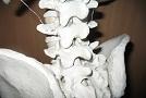 Cvičenie na driekovú chrbticu