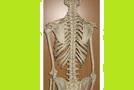 Prečo bolí chrbtica?