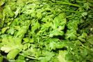 Pestovanie zelených vňatí v zime