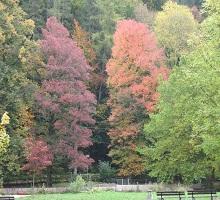 Posledné jesenné lúče
